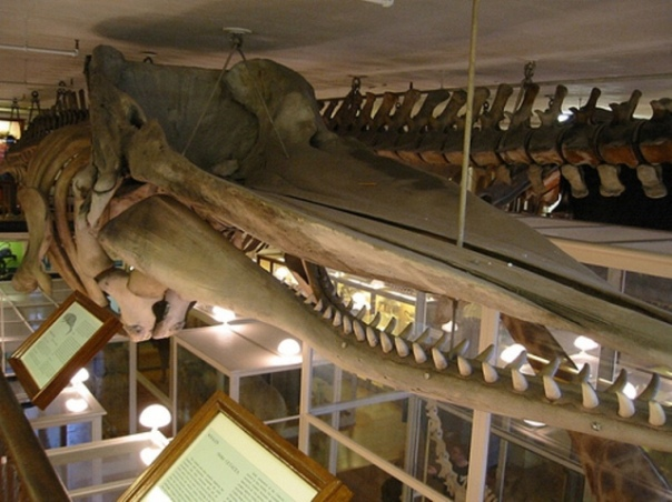 Harvard Natural History Museum